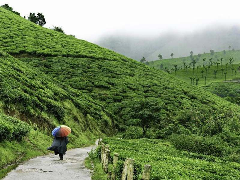 Honeymoon Tour Packages In Munnar