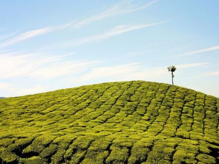Places To Visit In Cochin In 1 Day