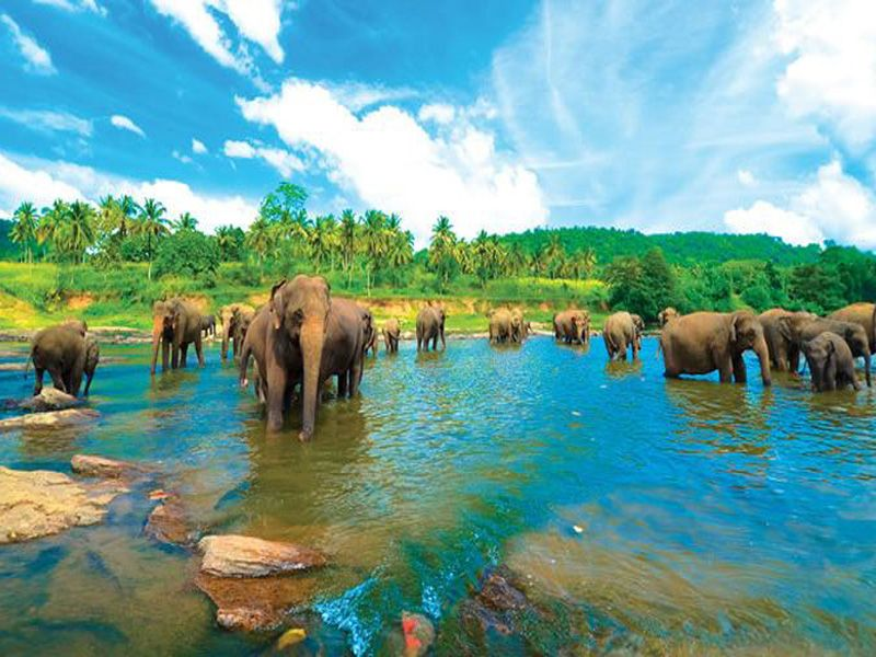 4 Nights 5 Days Sri Lanka Package Price