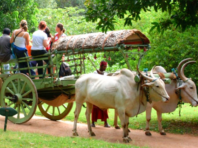 Blogs For Amazing Village Tourism In Kerala