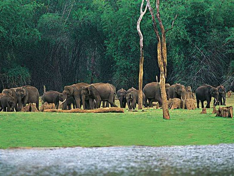 Travel Guide To Ecotourism Destinations In Kerala