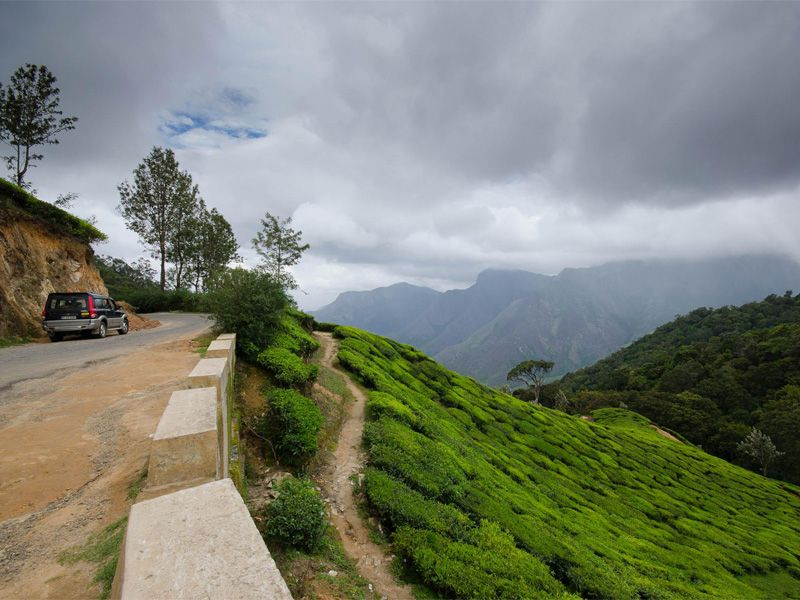 Travel Guide In Munnar