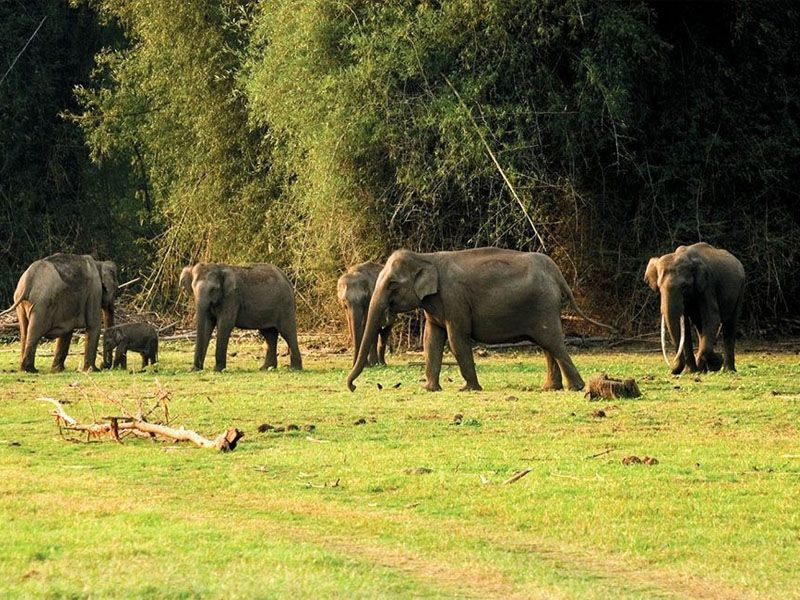 Tour Operators In Thekkady