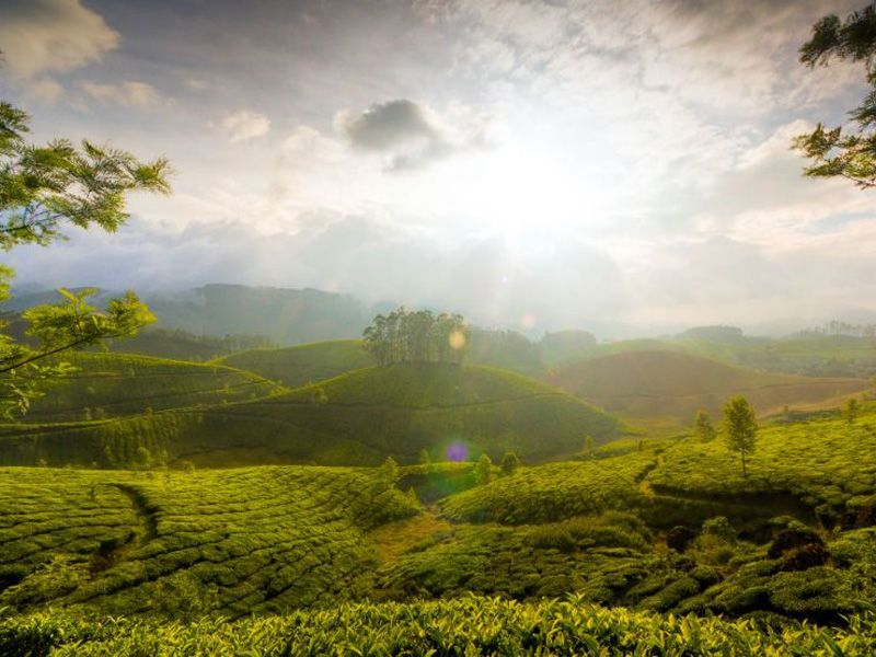 Thekkady Honeymoon Package