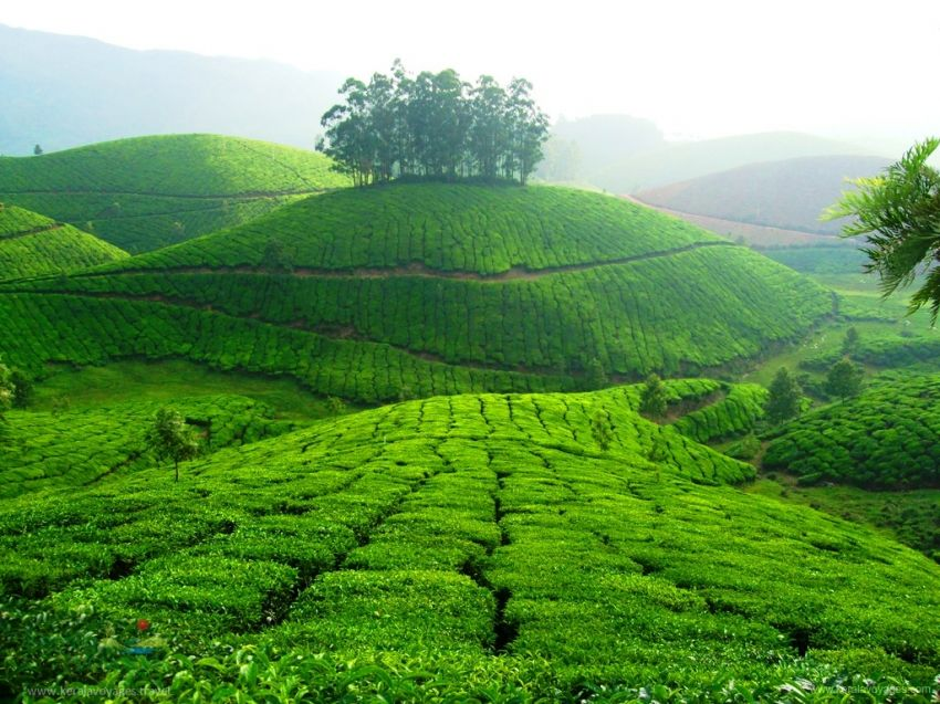 Thekkady Tour Packages For Couple