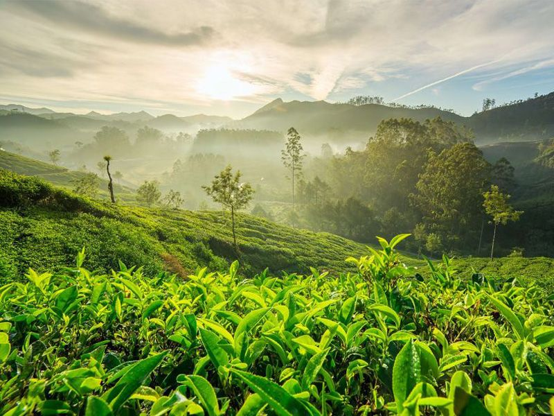 Munnar Tour Packages For 2 Days