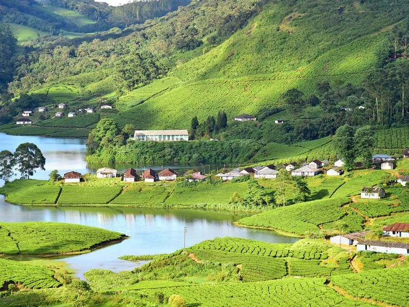 Premium Romantic Honeymoon Tours In Munnar