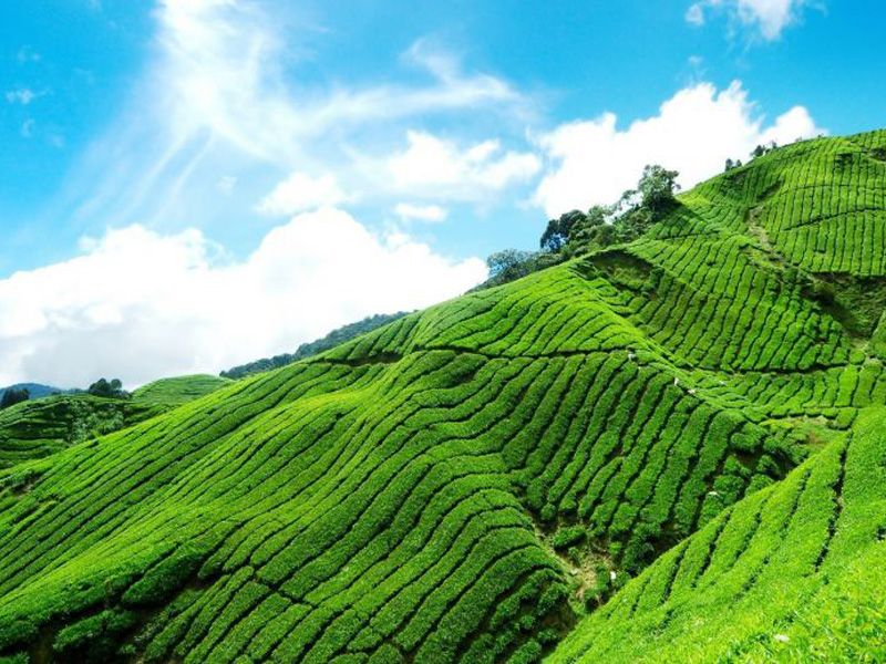 Munnar Tour Packages From Cochin
