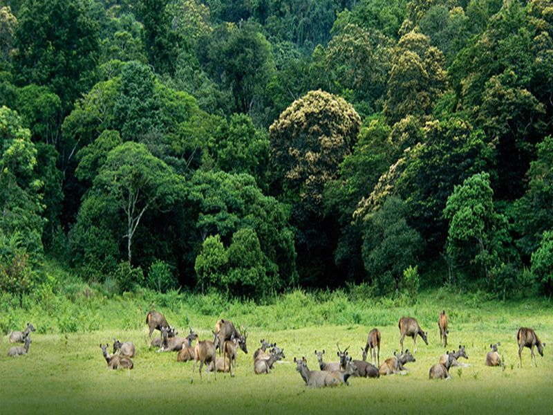 Periyar National Park Elephant Safari In Thekkady
