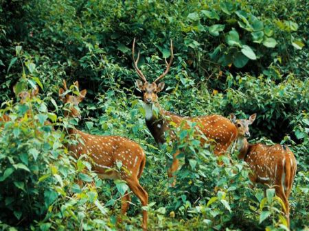Best Places to Visit in Wayanad