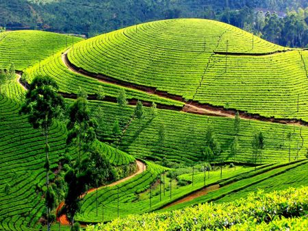 Travel Destination In Kerala Blog