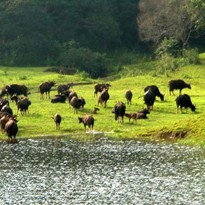 <span>Day 07:</span> Full day explore Thekkady (Periyar National Park)
