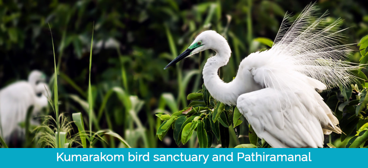 Kumarakom bird sanctuary and pathiramanal
