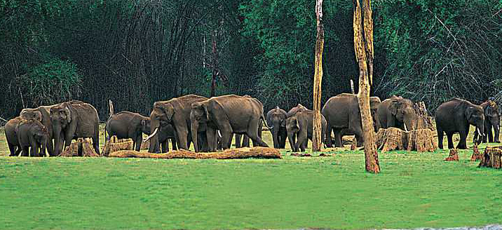 Places to visit in Thekkady